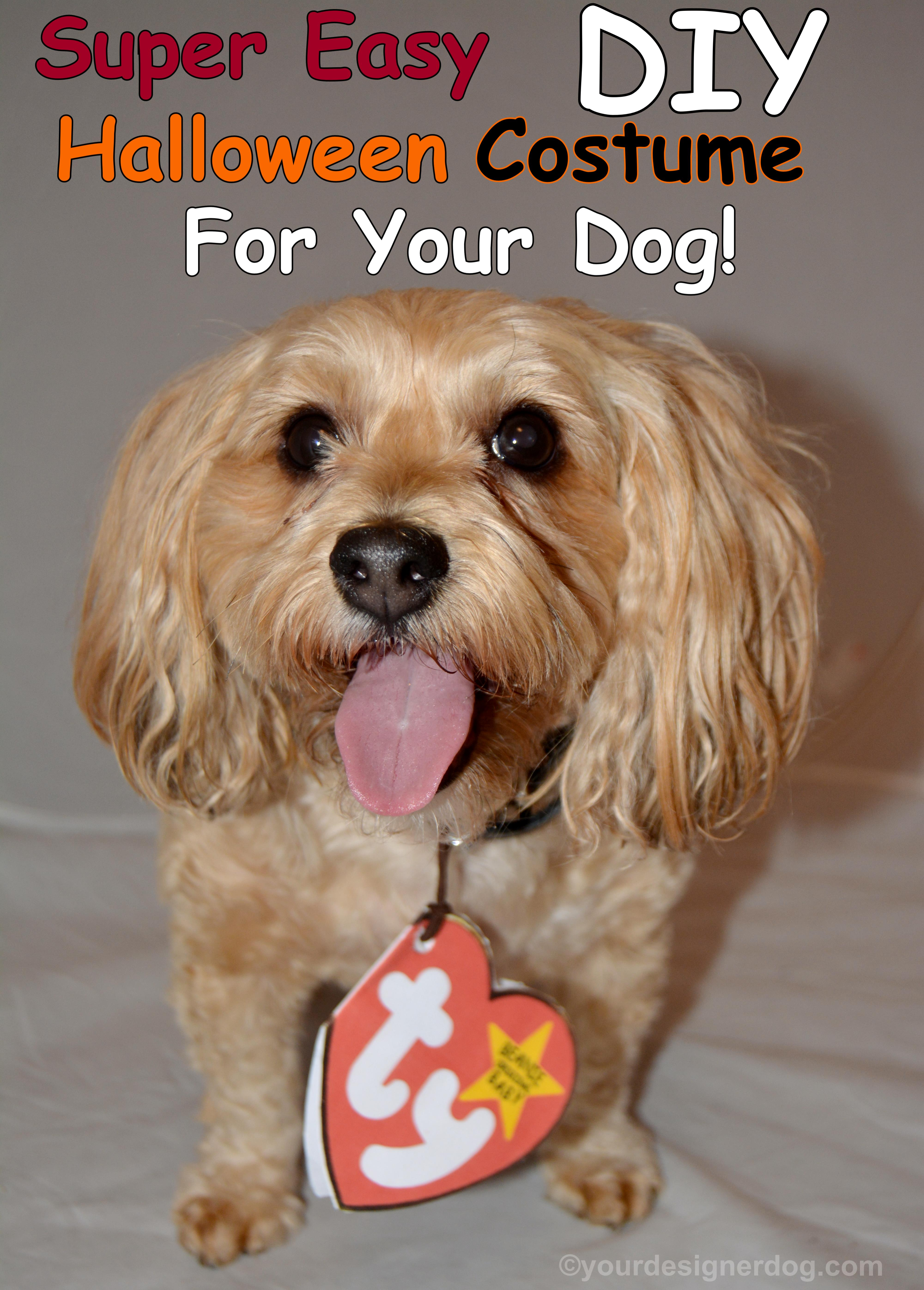 Super Easy DIY Halloween Costume For Your Dog!
