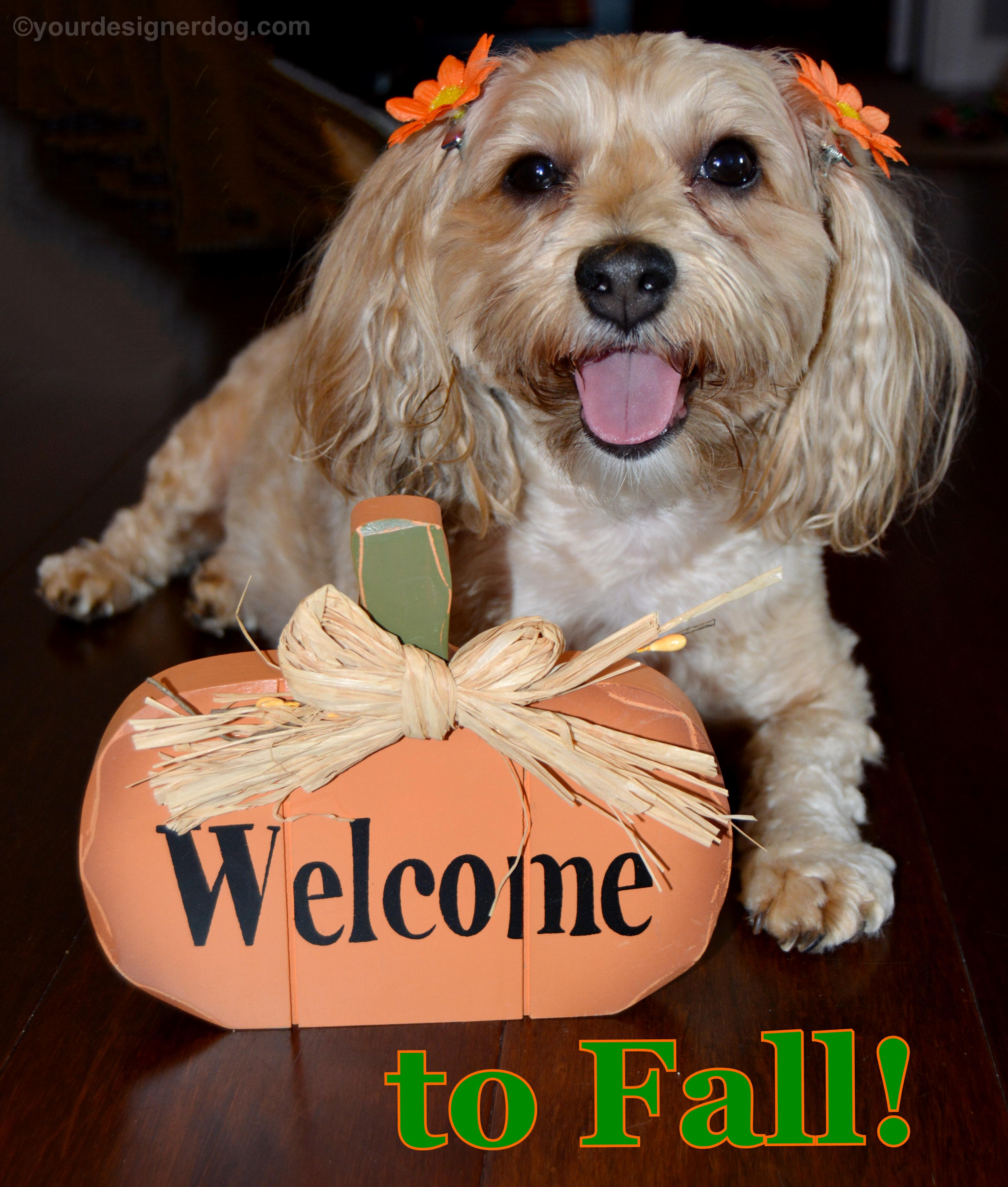 Welcome to Fall!