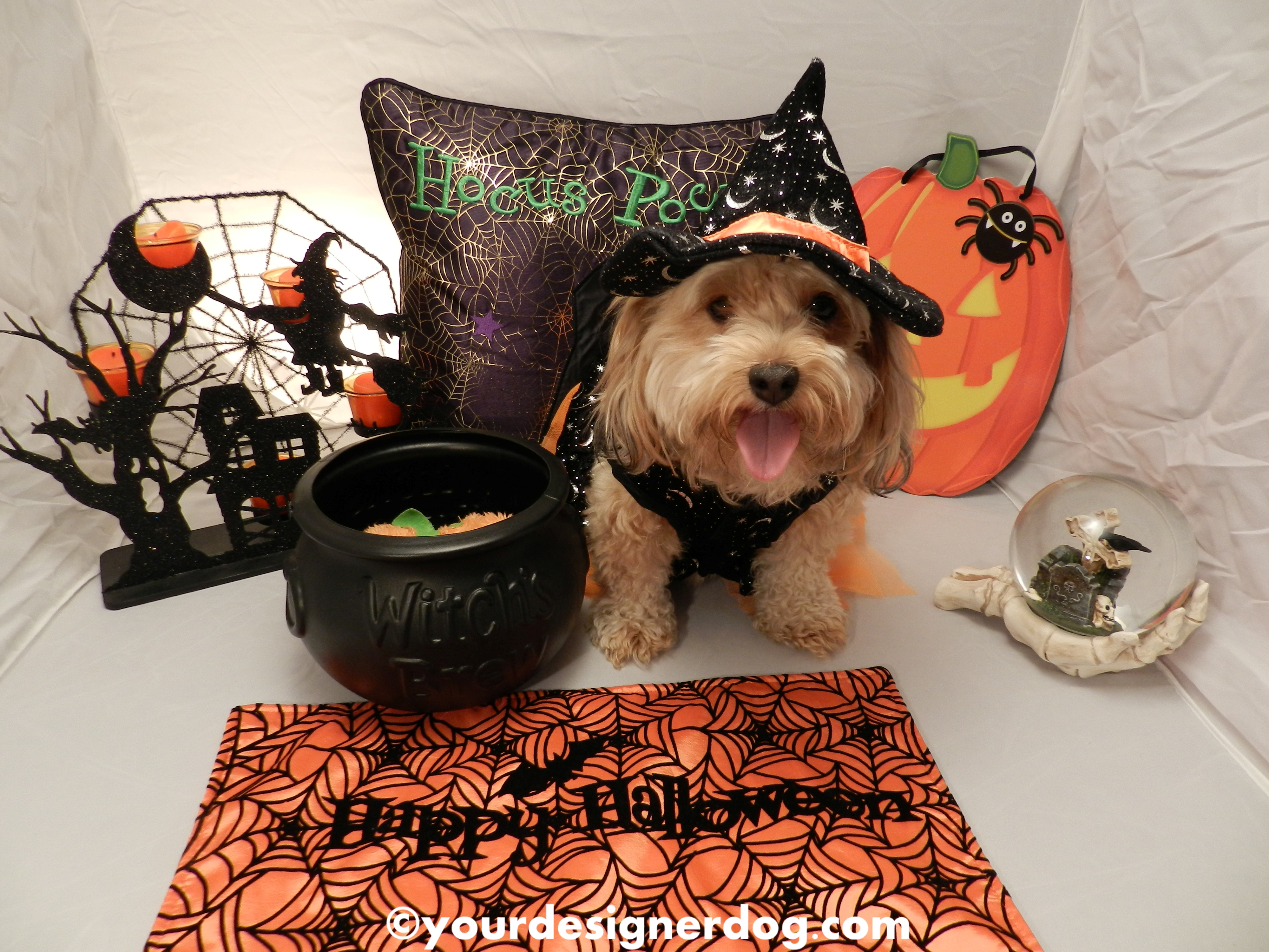 Have a Witchy Halloween!