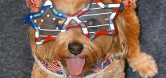 Tongue Out Tuesday – Ready for Flag Day