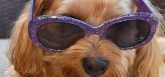 Today is National Sunglasses Day!