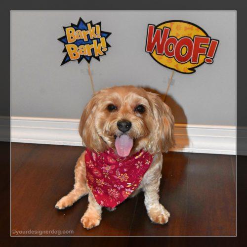 dogs, designer dogs, yorkipoo, yorkie poo, caturday art, pet portrait, digital art
