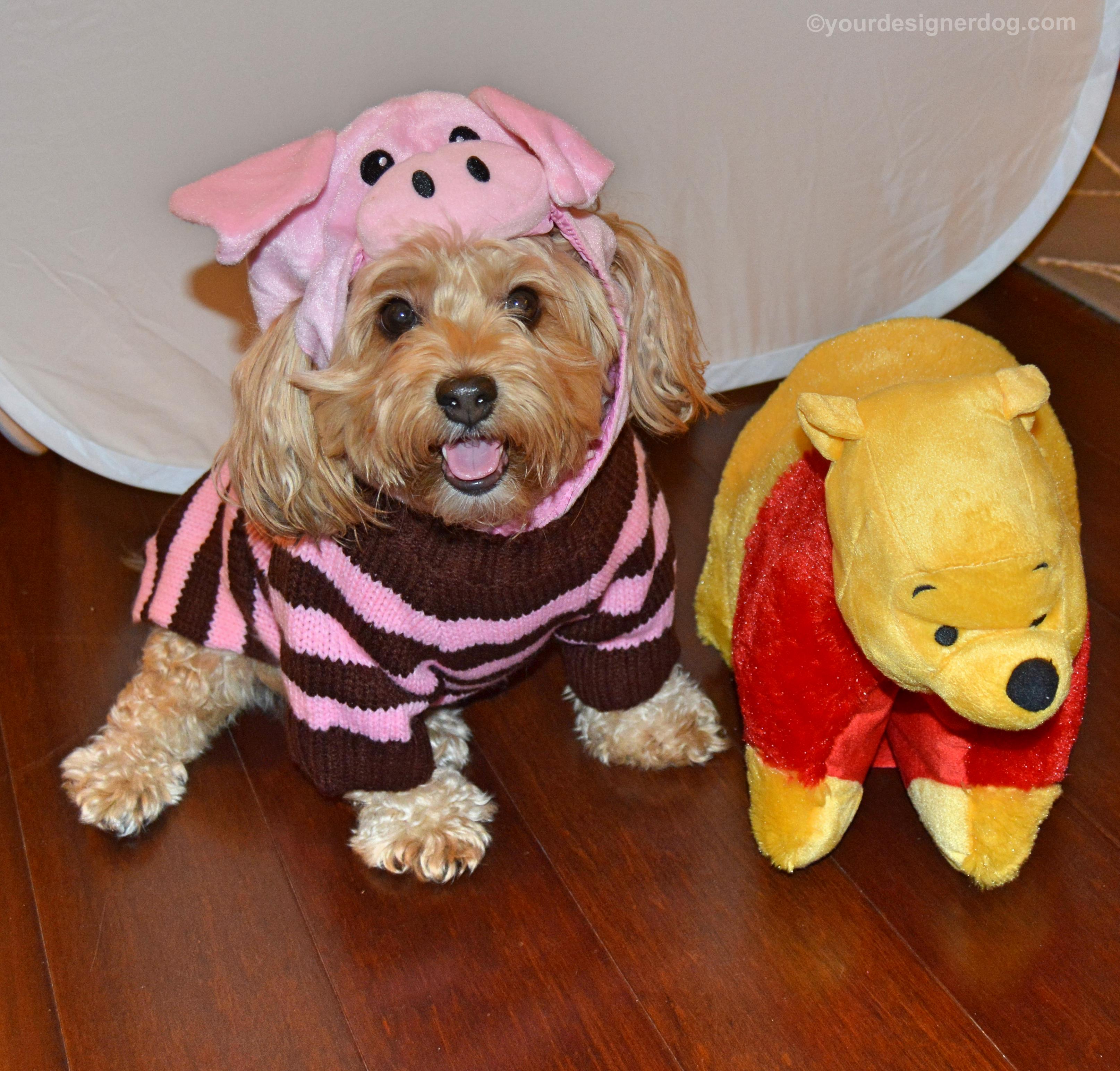 dogs, designer dogs, yorkipoo, yorkie poo, piglet, halloween costume, dog costume, winnie the pooh