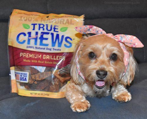 dogs, designer dogs, yorkipoo, yorkie poo, true chews, dog treats, steak