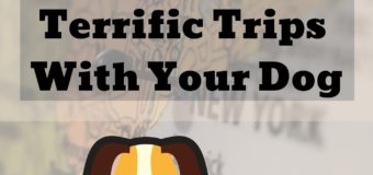 101 Tips For Terrific Trips with Your Dog